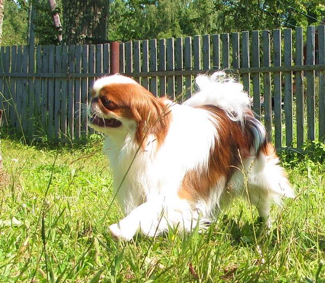 Сочи форум собаки из ризинок - 9e2